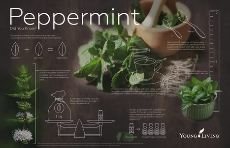 Young Living Peppermint Oil is a great support for the Cardiovascular, Digestive, Nervous, Lymphatic, Muscular, Respiratory and Skeletal Systems.  Find out some ways to use Peppermint and take The Oily Plunge on www.sherilbrasher.info & order some today at http://bit.ly/1rL8jOO. #youngliving #essential #oils