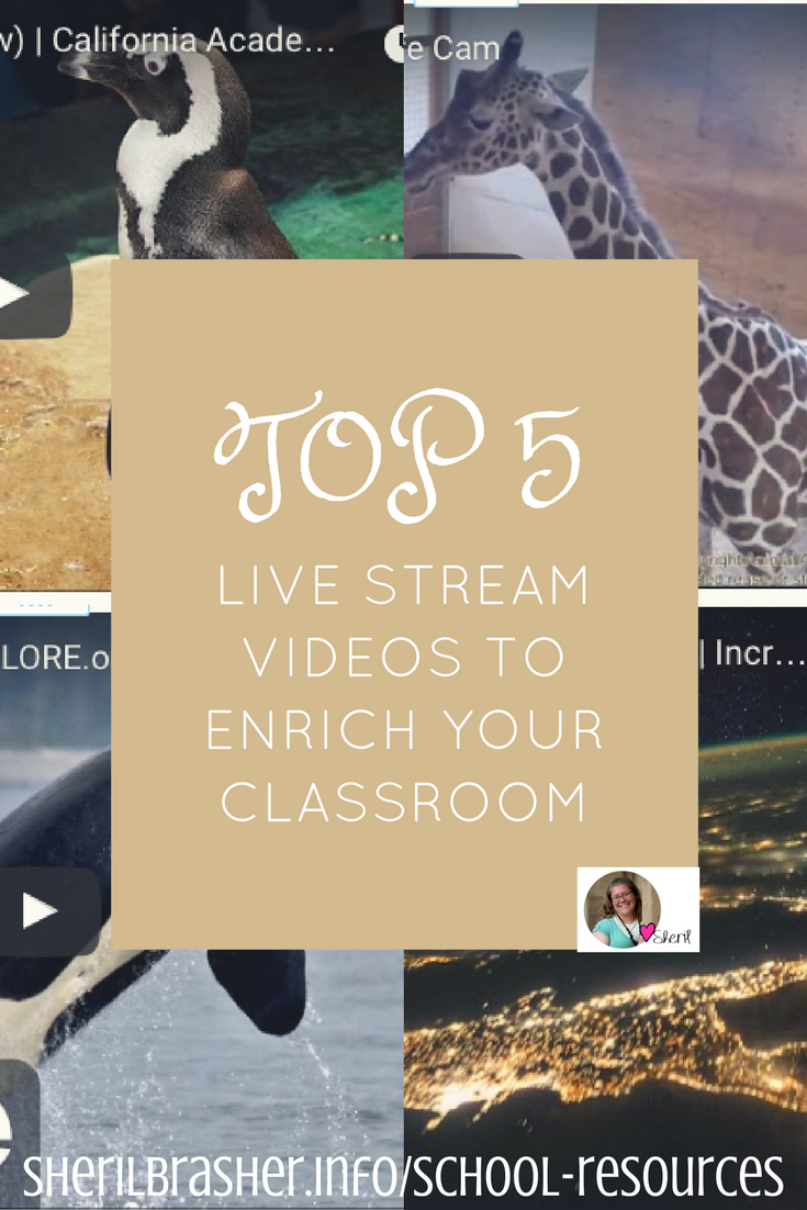 Our Top 5 Favorite LIVE Stream Videos to Enrich Your Classroom. This is not an all inclusive list by all means but just a few of our favorites. Head over to sherilbrasher.info/school-resources to see our list and tell us what we have missed.